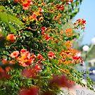 Post card from Crete . 08.2018. © Dr.Andrzej Goszcz. by © Andrzej Goszcz,M.D. Ph.D