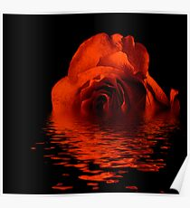 Reflection of a Bronze Rose Poster