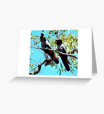 Red Tailed Black Cockatoos Greeting Card