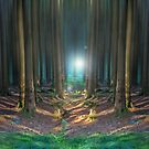 Forest Light by Cat Perkinton