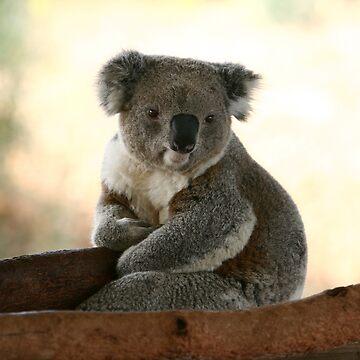 Koala wake up from sleep by yelys