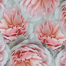 Petals In Pink by Christine Lake