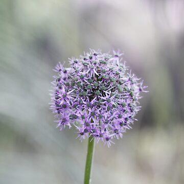 Lilac Flower by leizure