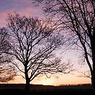 Autumn Trees  by diveroptic