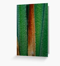Cycad Greeting Card