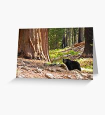 Black Bear in Giant Sequoia Forest Greeting Card