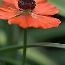 Orange Single by picketty