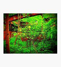 Red Versus Green,Versus Man,Versus Nature  Photographic Print