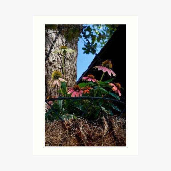 Hanging Basket of Flowers Art Print