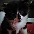 Kitten Sweetness by annAHorton