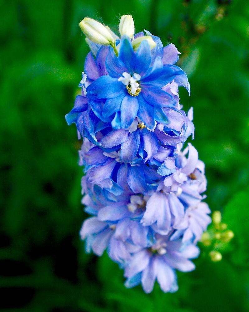 Blue Flowers by EricaRobbin