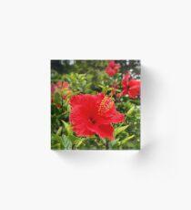 Red Hibiscus, Maui, HI, USA Acrylic Block