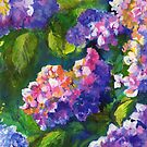 Hydrangeas by Maureen Whittaker