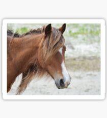 Wild Horse Close Up Sticker