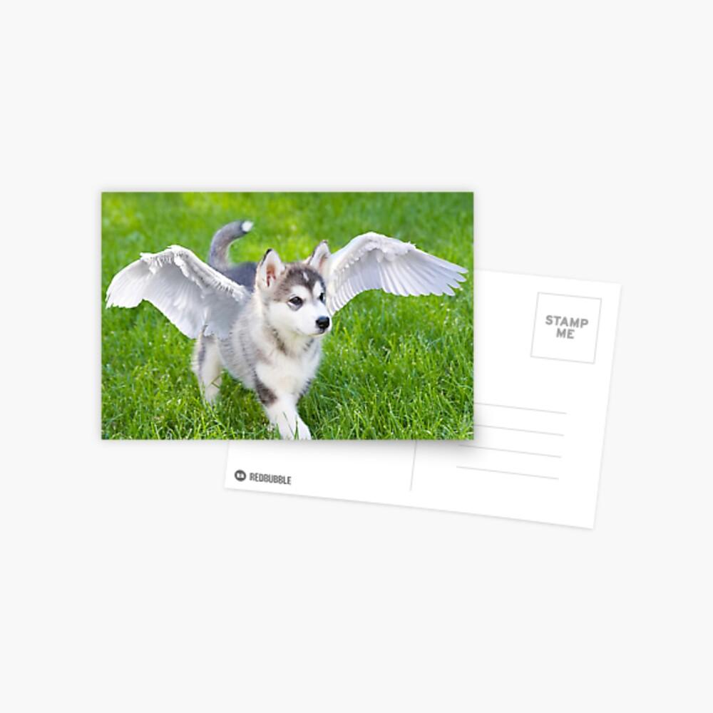 Angel puppy Postcard
