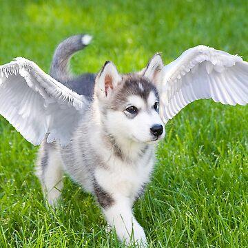 Angel puppy by littlefox