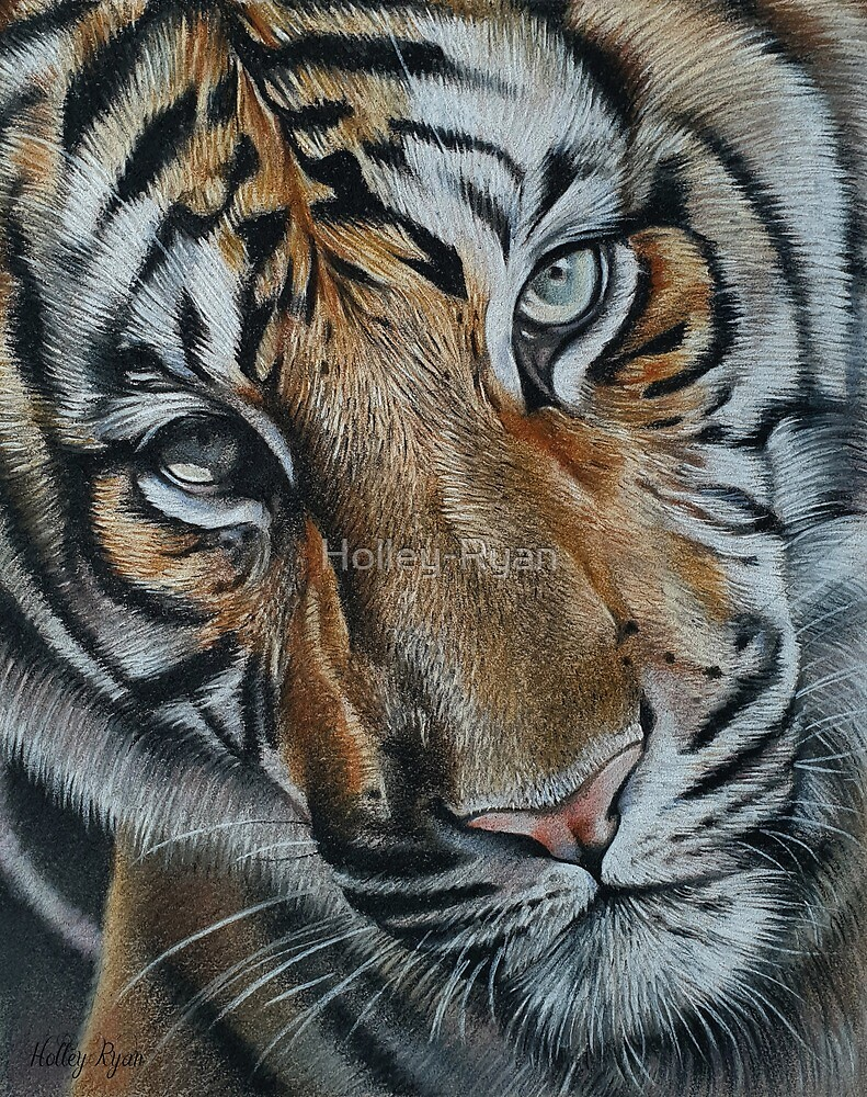 Tiger Face by Holley-Ryan