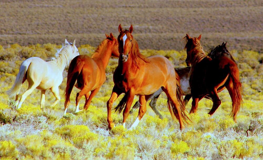 SEPTEMBER MORNING NEVADA  by Jeanne  Nations
