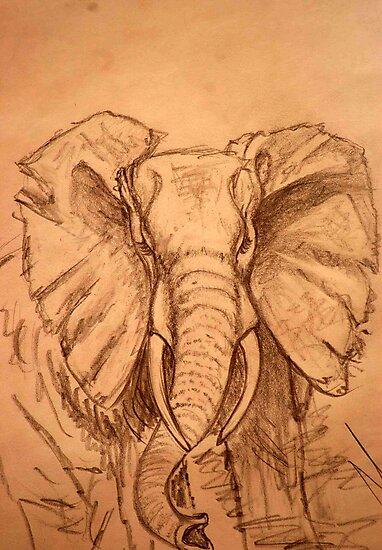 AFRICAN ELEPHANT - PENCIL SCHETCH by Magriet Meintjes