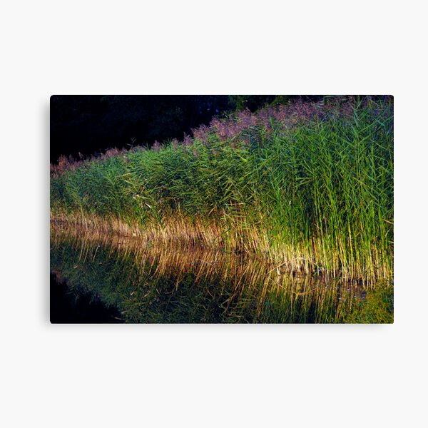 The Reeds Canvas Print
