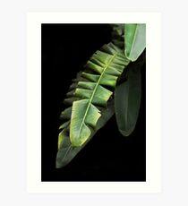 Banana Leaf Kunstdruck