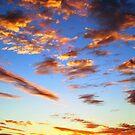 Desert Oaks by STEPHANIE STENGEL | STELONATURE PHOTOGRAPHY
