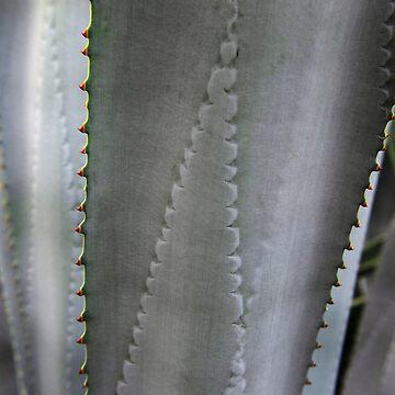 Silver Cactus by discreetpeacock