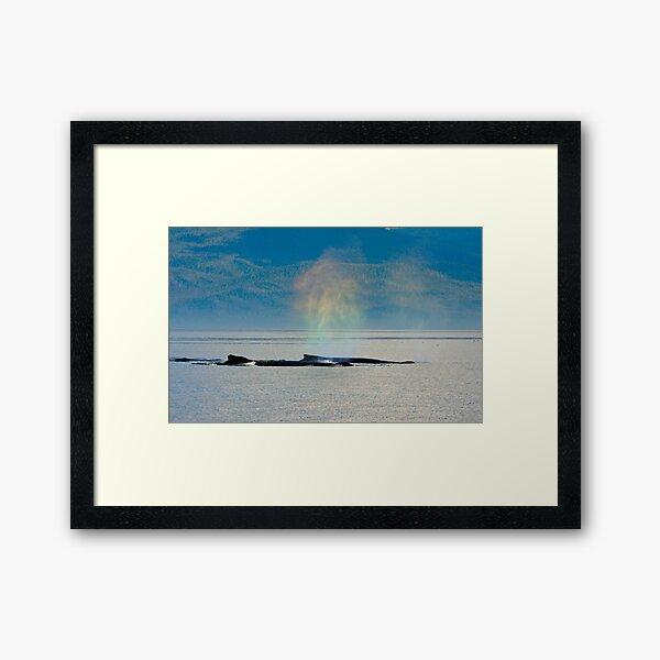 Whalebows Framed Art Print
