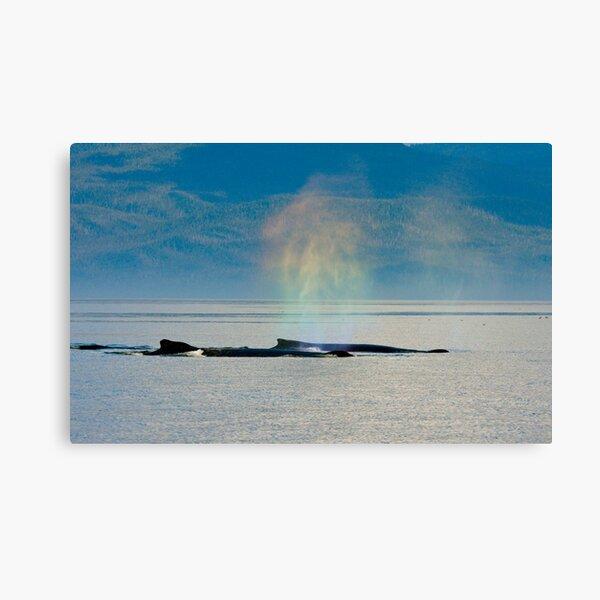 Whalebows Canvas Print