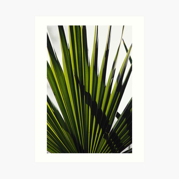 Green Blades Art Print