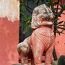 Cambodia lion  by Martina Nicolls