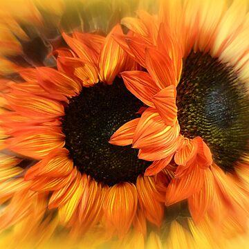 THE SUN FLOWERING by elainebawden
