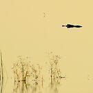 Lurking Luminous Swamp Lagoon Creature.  by Elizabeth Rodriguez
