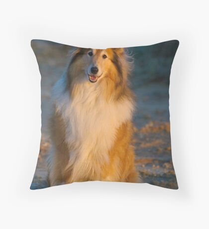 Sun Dog Throw Pillow