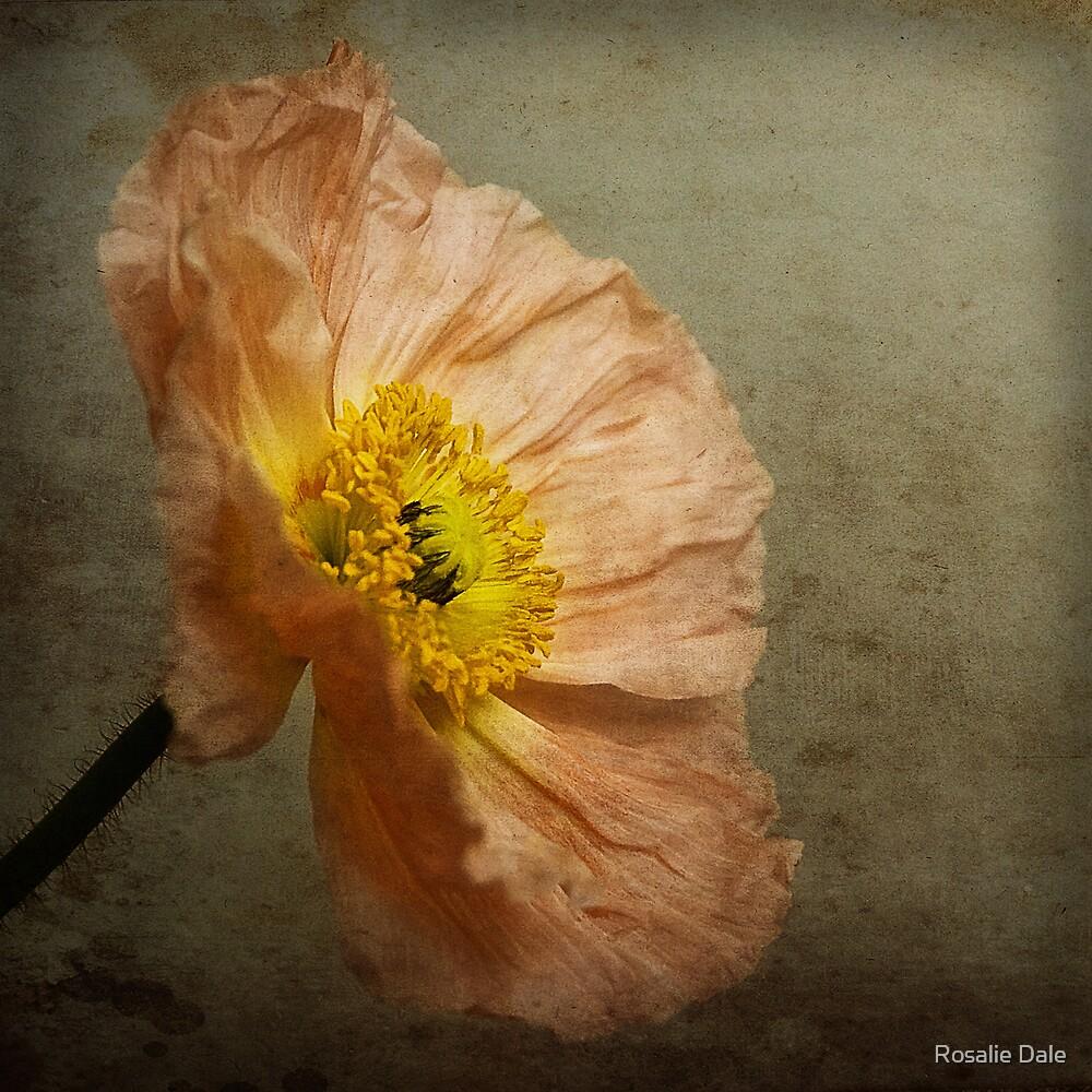 Poppy by Rosalie Dale