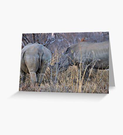 THE WHITE RHINOCEROS  COUPLE - Ceratotherium simum Greeting Card