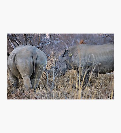 THE WHITE RHINOCEROS  COUPLE - Ceratotherium simum Photographic Print
