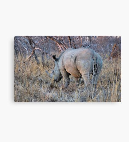THE RHINOCEROS - Ceratotherium simum Canvas Print