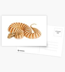 Common Death Adder (Acanthophis antarcticus) Postcards