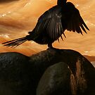 cormorant by Bernhard Matejka