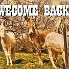WELCOME BACK, Photo, for greeting cards and postcards by Bob Hall©