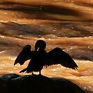 cormorant III by Bernhard Matejka