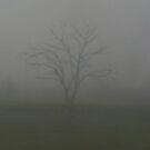 Morning mist by Gabriela G