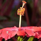 red flower by Bernhard Matejka
