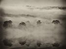 """Mystic Mist"" by debsphotos"