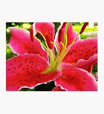 Star Gazer Lily Photographic Print