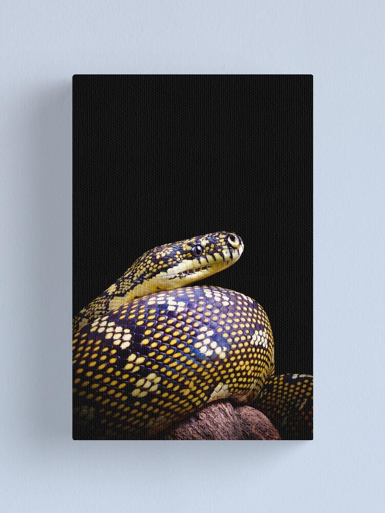 Alternate view of Diamond Python (Morelia spilota spilota) Canvas Print
