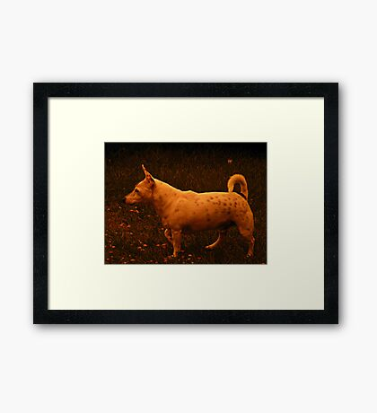 Dust storm Redcliffe - Otis wonders why everything is orange  Framed Print