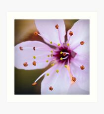 Hello Blossom Art Print