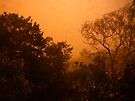 orange morning of the apocalypse from the back window by Juilee  Pryor